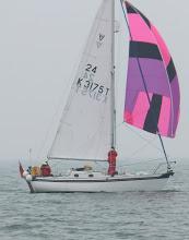 V II 24 Poppy